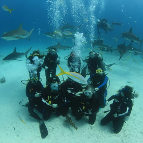 Fish and sharks swim around a group of students in scuba gear underwater